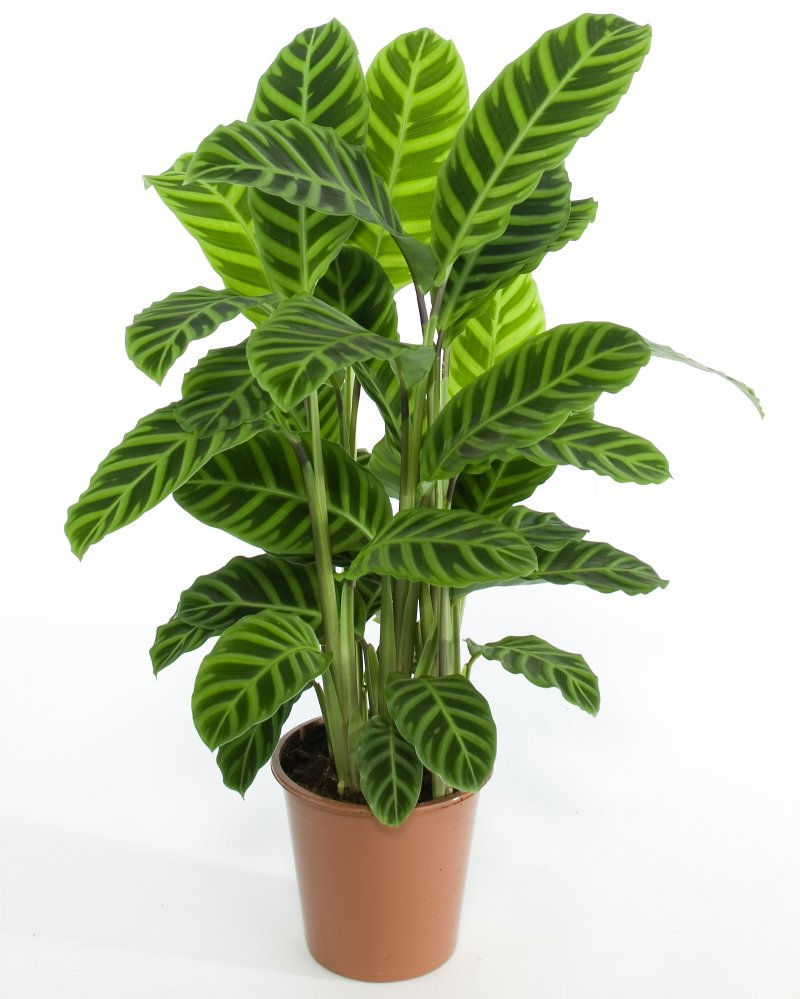 Image result for house plant