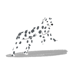 Dalmation in SF