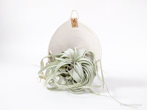 Fleur - Plant Hanging Pocket ft. Tillandsia