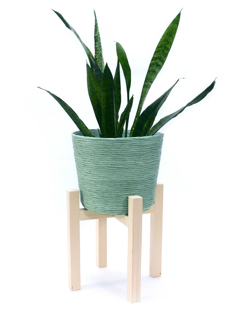Sucus Planter w/ stand - Green Sunset