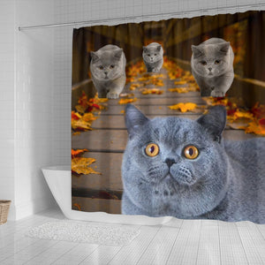 Amazing British Shorthair Cats Shower Curtain - grumpycat.store