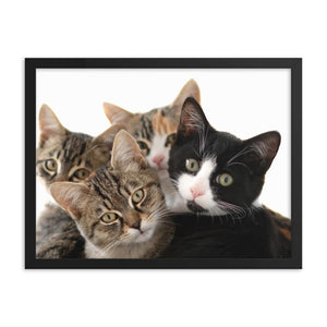 Framed poster - Four cats amazed by the photographer - grumpycat.store