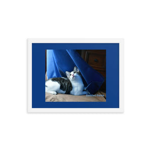 Framed poster - The cat Dante is dazzled by the movements of curtains in the wind and sunlight - Isabela Puerto Rico - grumpycat.store