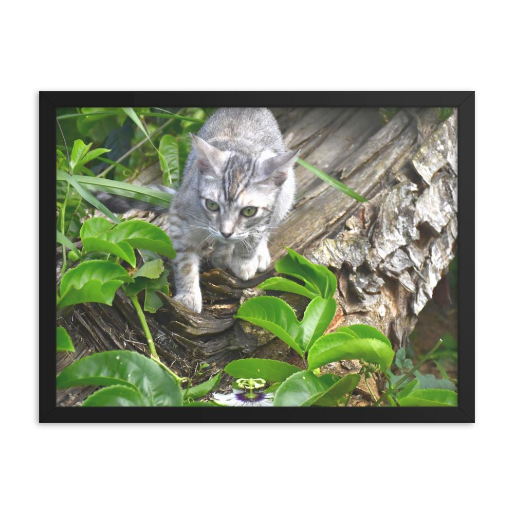 Framed poster - The home cat Mimi explores next to a passionfruit flower in tree toppled by Hurricane Maria - Isabela Puerto Rico - grumpycat.store
