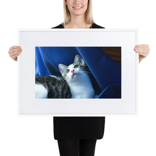 Matte Paper Framed Poster With Mat - The baby cat Dante dazzled with the curtains, wind and light - Isabela Puerto Rico - grumpycat.store