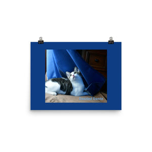 Photo paper poster - The cat Dante is dazzled by the movements of curtains in the wind and sunlight - Isabela Puerto Rico - grumpycat.store