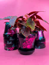 Load image into Gallery viewer, COLLAB: hand-painted pot and begonia pink polkadot plant