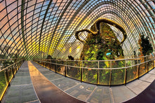 Load image into Gallery viewer, MANDARIN ORCHARD l 2D1N l Kid's Stay Free l Gardens by the Bay