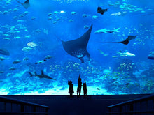 Load image into Gallery viewer, HOTEL MICHAEL l 3D2N l 2 Adults l SEA Aquarium and Cable Car Dining Experience - Origin Journeys