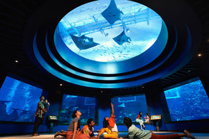 SEA Aquarium Admission Ticket l Lunch at Hard Rock Cafe Sentosa PLUS Limited Edition HRC Mask