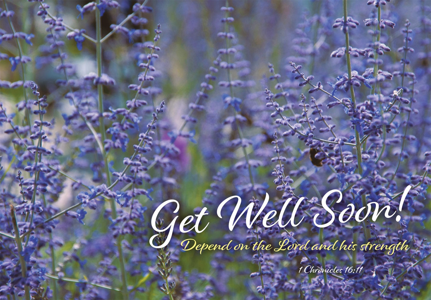 Get Well Soon - Lavender Std Card Gloss (6 Pack)Get Well Soon - Lavender Std Card Gloss (6 Pack)