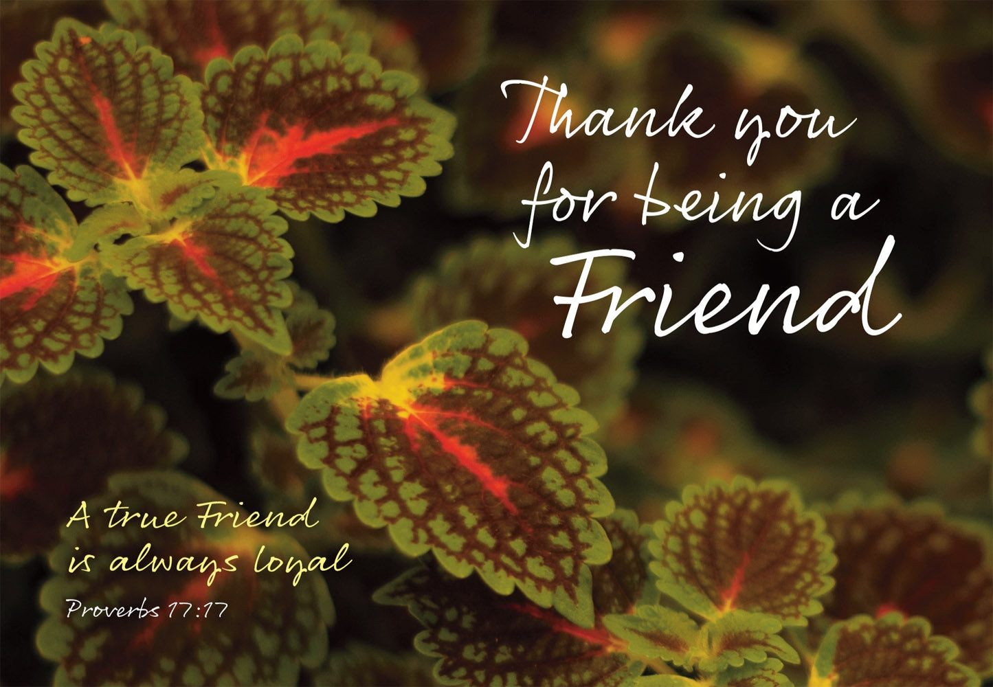 Thank You - Leaves  Std Card Gloss (6 Pack)Thank You - Leaves  Std Card Gloss (6 Pack)