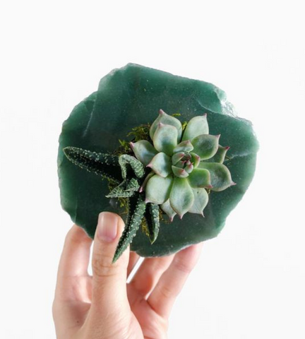 Holiday Gift Guide - Pine Flora Planter