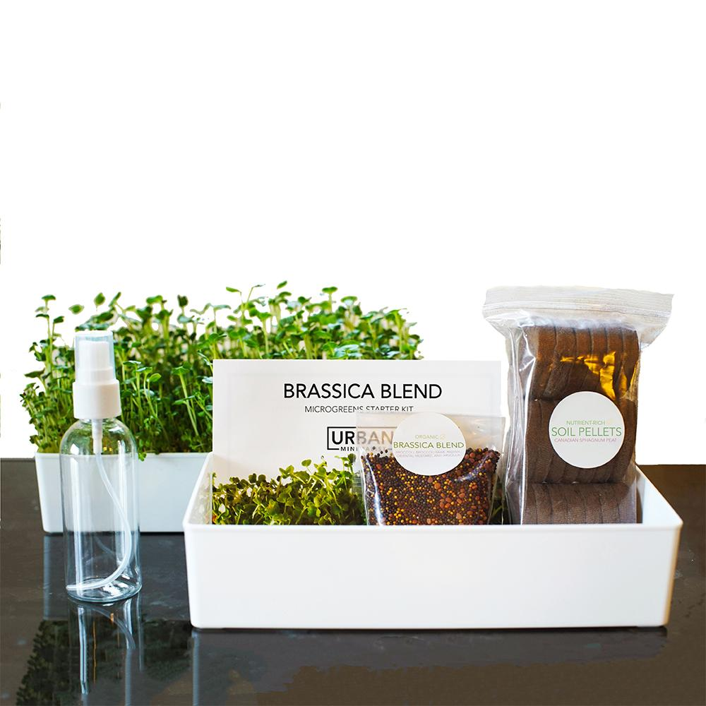 Load image into Gallery viewer, Microgreens Starter Kit 3-Pack - Broccoli Brassica, Microgreen Salad Mix & Wheatgrass