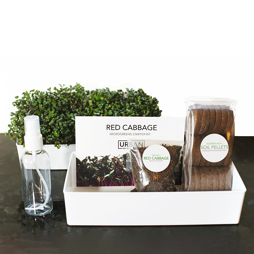 Grow Your Own Red Cabbage Microgreens Kit