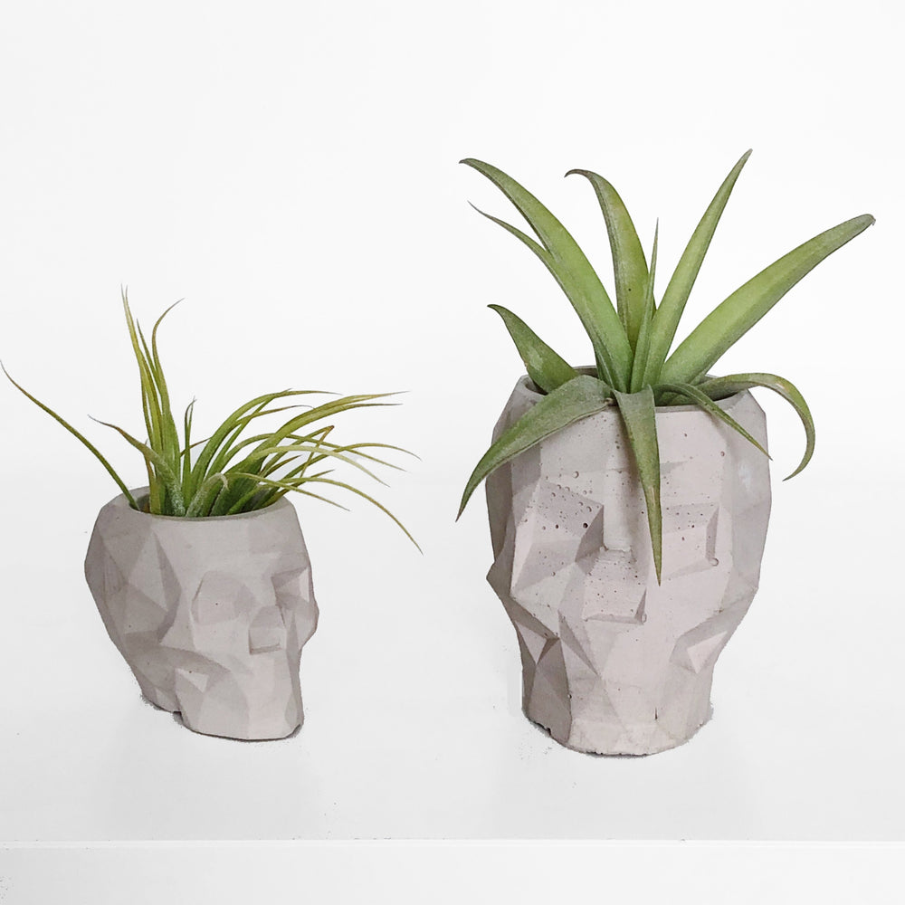 Load image into Gallery viewer, Mini Geometric Skull Air Plant Holder