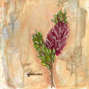 Adina I (callistemon) by Giovanna Scott
