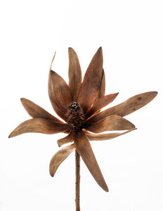 Leucadendron (Fine Art Photography)