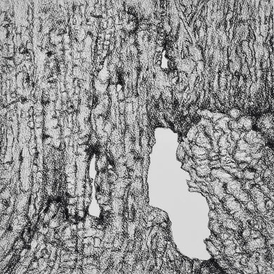 Bark Series - No 1 by Helen Keogh