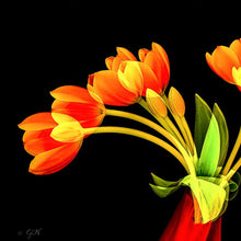 Load image into Gallery viewer, Tulips Forever by Cheryl Nancarrow