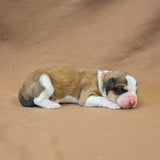 Great Bernese Puppy lying sideways