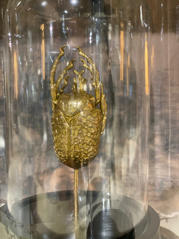 Gold Scarab Beetle Specimen in Glass Dome