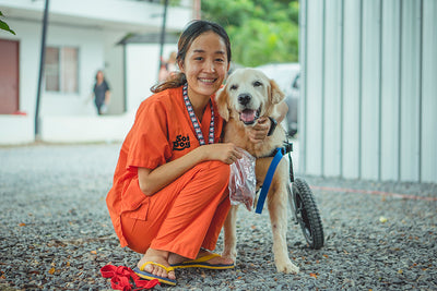 Get to know the Soi Dog Foundation