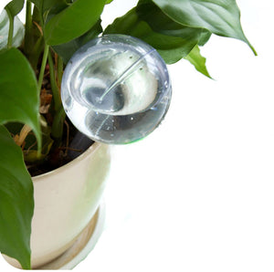 Automatic transparent Watering Device for Houseplants