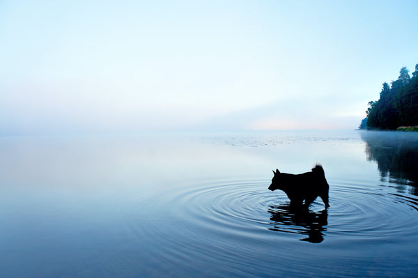 Dog in Blue Lake