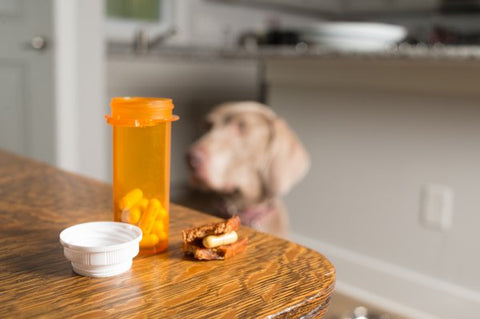 Pill bottle on a table with a pill stuffed into a dog treat with dog in the background
