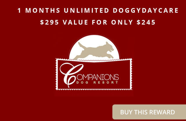 Companions Dog Resort 1 Months Unlimited DoggyDaycare - $295 value for only $245