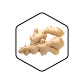 Ginger Root Organic Extract