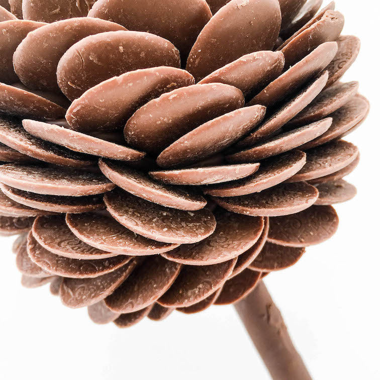 Chocolate Button Sweet Trees by Browns