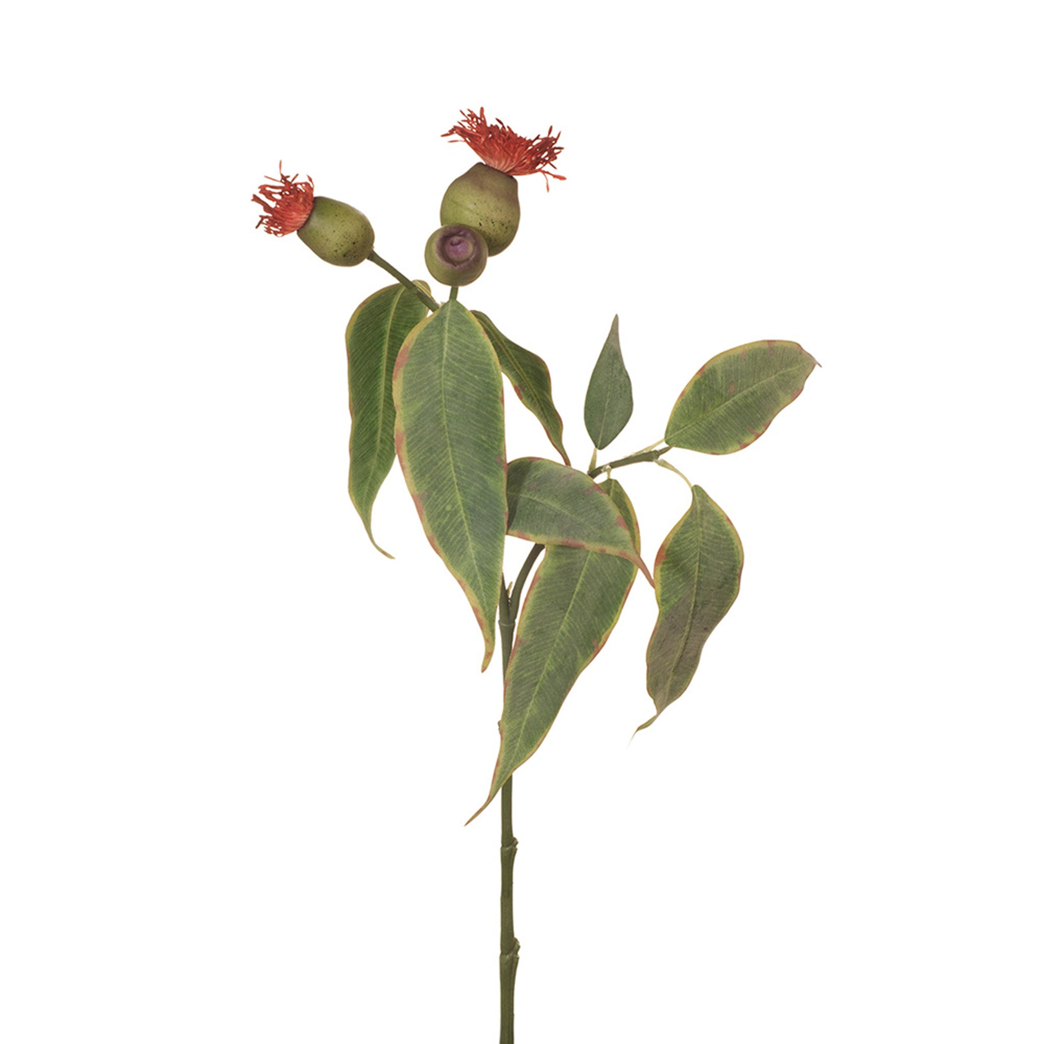 Floral Interiors, Eucalyptus Pod Flowering in red. This stunning artificial flowering eucalyptus pod looks lovely in a simple bunch or add to extra faux greenery to add a touch of colour. Keep out of direct sunlight. 50cm