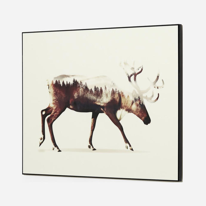 Moose In Motion-fliphome.com.au