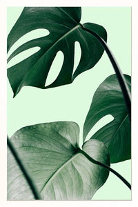 Monstera Detail-fliphome.com.au