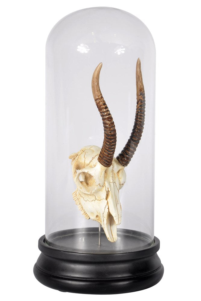 Tribal Antelope Skull Dome