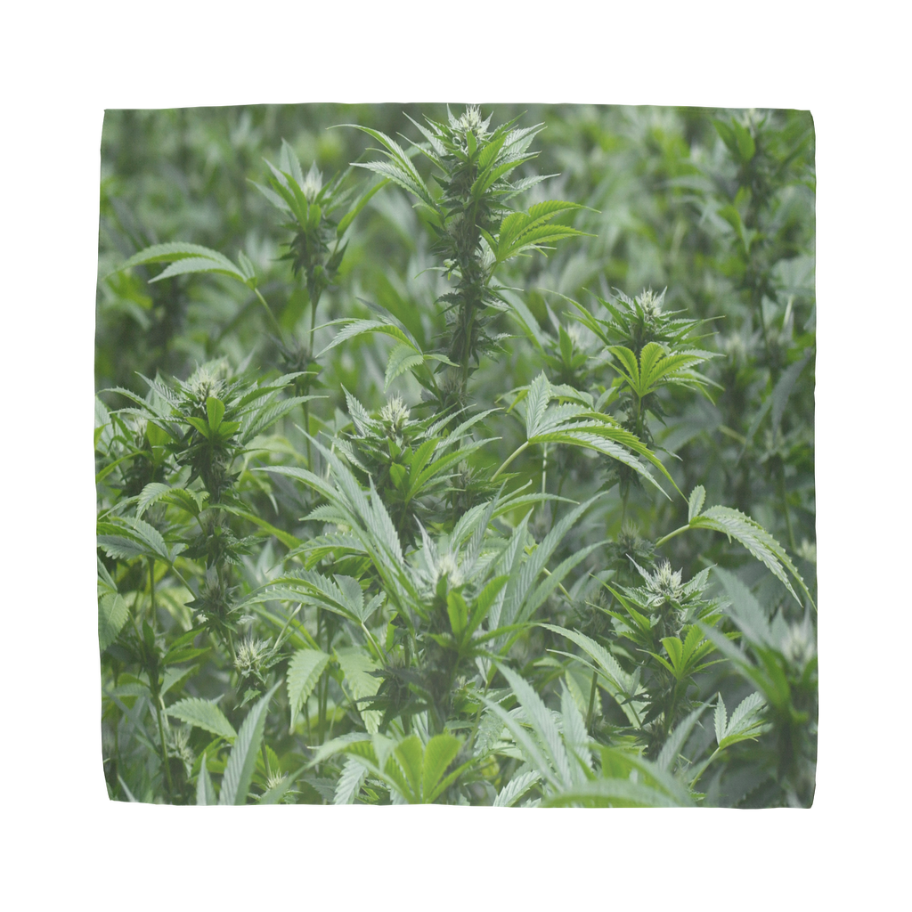 All over print cannabis bud weed Sublimation Bandana