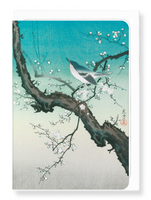 Bush warbler and plum blossoms