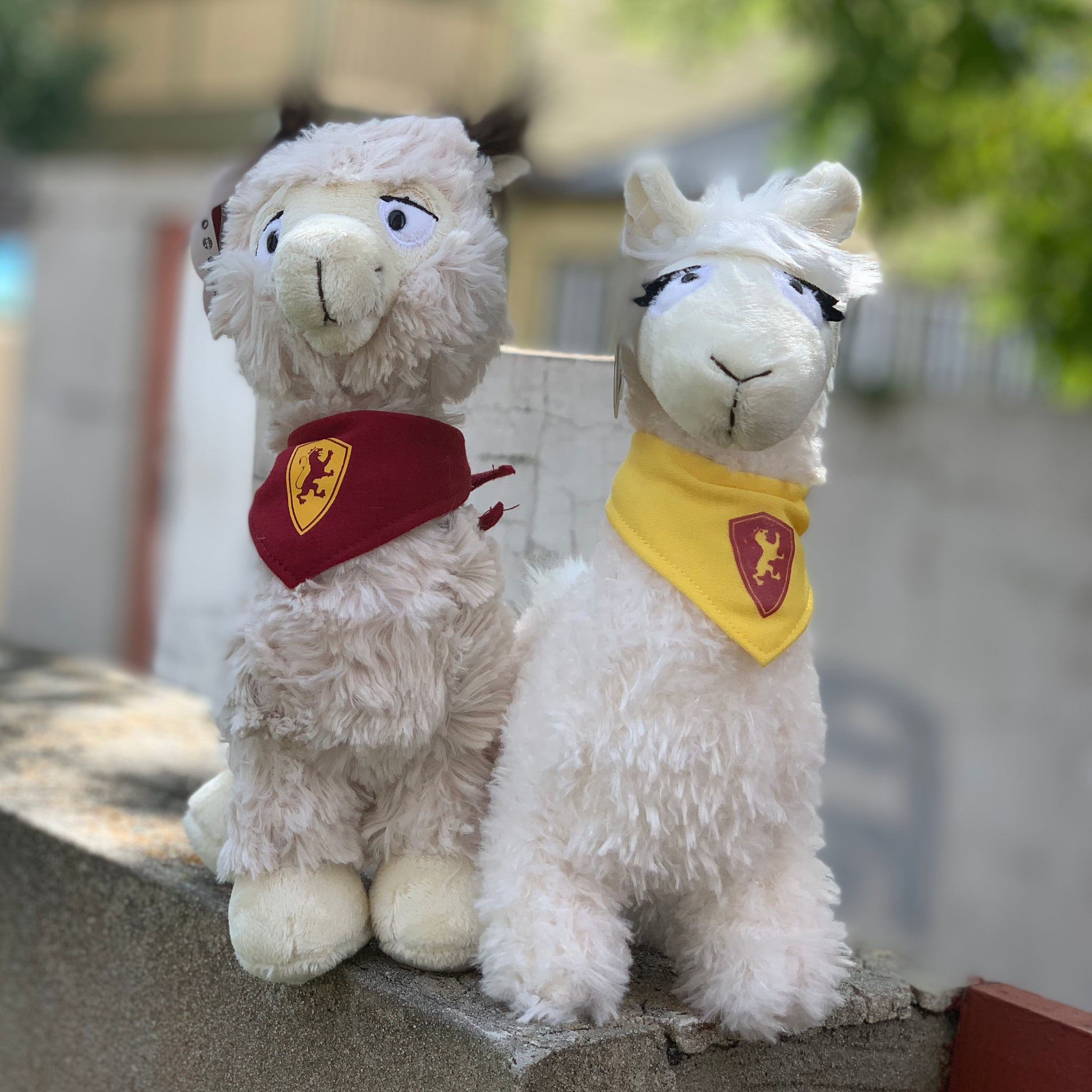 Tony and Tina Llamas