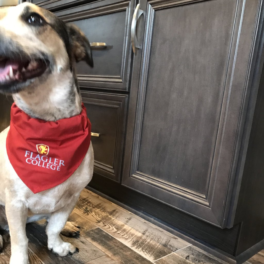 red dog bandanna with Flagler college printed in white and shield printed in red and gold