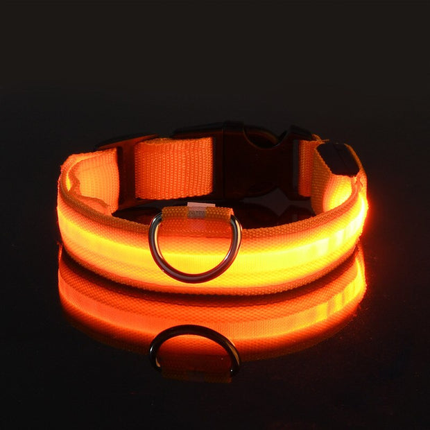 PetTree™  LED Flashing Collar