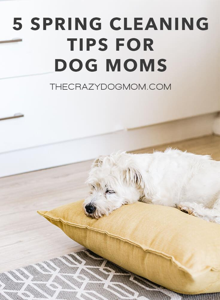 5 Spring Cleaning Tips for Dog Moms