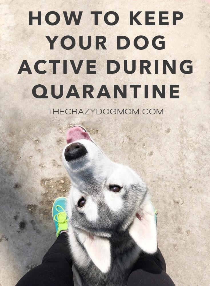 How to Keep Your Dog Active During Quarantine