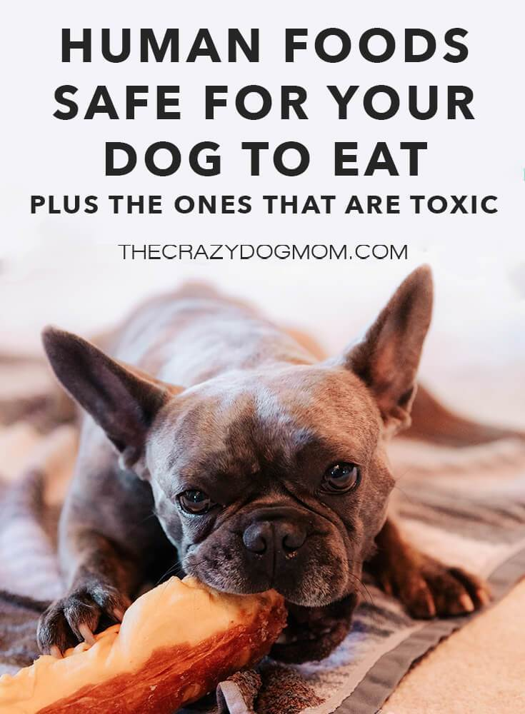 safe and toxic foods for dogs
