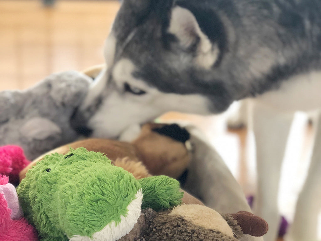 How to clean plush dog toys
