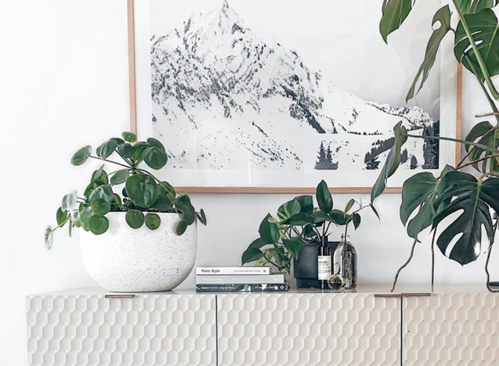 10 Creative Ways to Include Plants Into Your Home