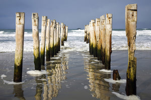 Saint Clair Beach, Dunedin - SM022