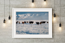 Load image into Gallery viewer, Winter Cows - SMA029