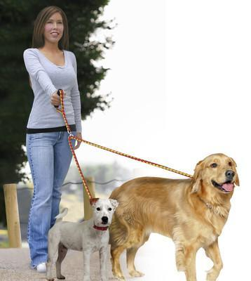 Two dogs walking on a leash
